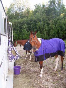 fair bank horses